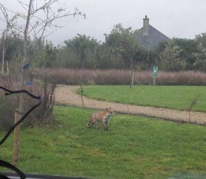 fox-solas-bhride