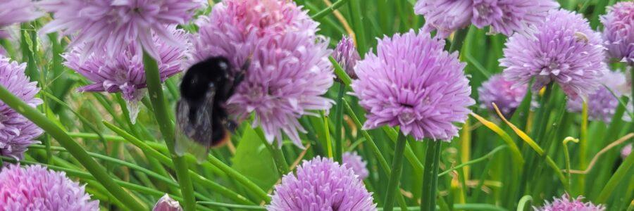 Season of Creation – Importance of Pollination